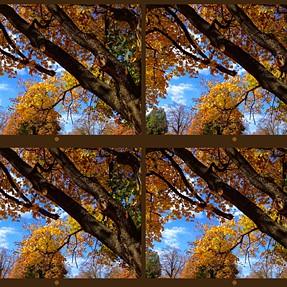 32 Autumn foliage images (Fuji W1 & W3)