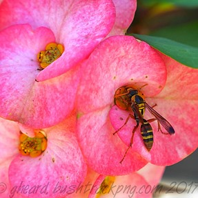 And today it was a wasp on a flower! (Yesterday a fly.)