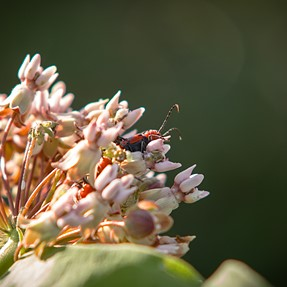 Summer morning walk: bugs, blossoms and birds