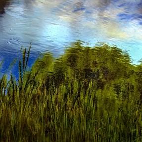 Reeds, Water, Cloud, 2