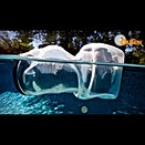 Outex launches clear, universal underwater camera housing
