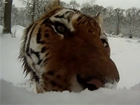 A short history of animals trying to eat GoPro cameras