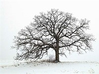 Exposure: Mark Hirsch and 'that tree'