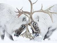 Slideshow: 2021 Wildlife Photographer of the Year winners and finalists
