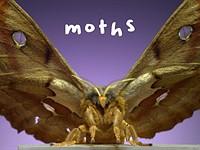 Video: Watch moths mesmerizingly take flight at 6,000 frames per second