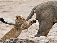 These hilarious photos are the winners of the 2019 Comedy Wildlife Photography Contest