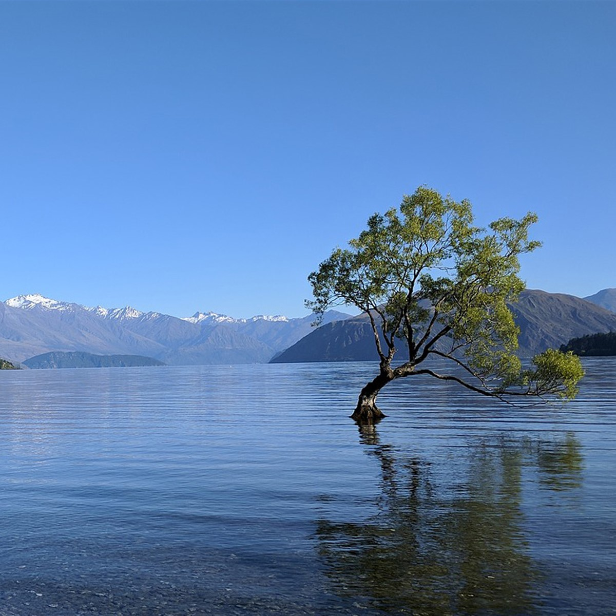 Tourists are destroying New Zealand's iconic Lake Wanaka tree for Instagram  photos: Digital Photography Review