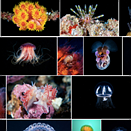 Flickr gives profile pages a makeover