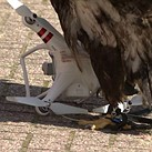 The Dutch police have shut down their drone-catching eagle program