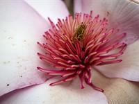 Dpreview拍摄西雅图着名的樱花(昂贵的齿轮)