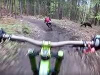 This video of a bear chasing a biker is why POV cameras were invented