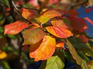 Just Posted: Olympus Stylus XZ-2 real-world sample images