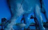 Award-winning wildlife photos capture candid moments