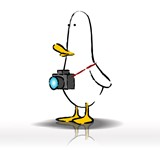 What The Duck #1408