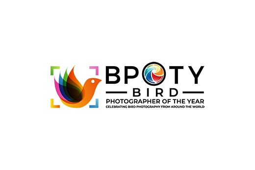 Slideshow: 2021 Bird Photographer of the Year finalists