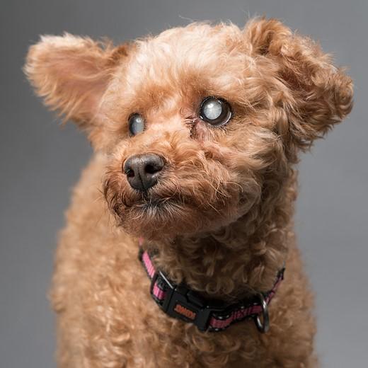 Simple Studio Technique: Pet Portraits 4
