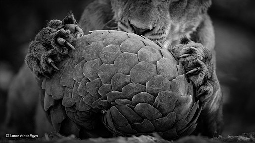 Wildlife Photographer of the Year 2016 winners announced 7
