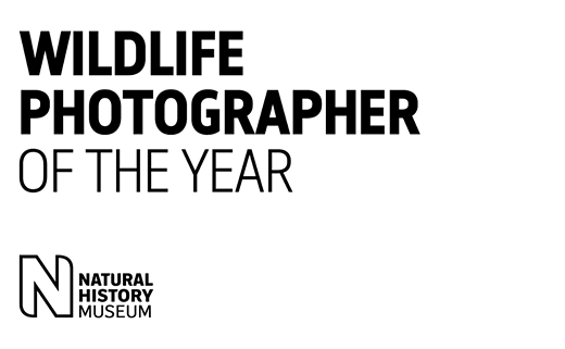 Slideshow: Winners of the 2020 Wildlife Photographer of the Year competition