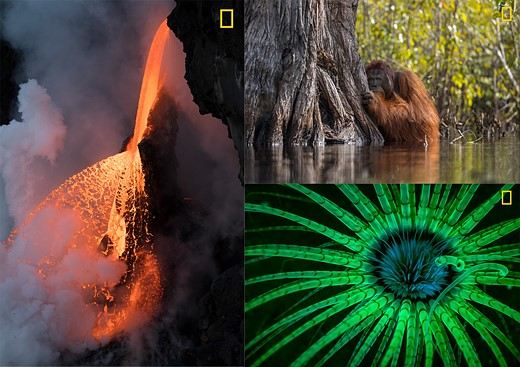 national geographic photographer year nature 2017 photo