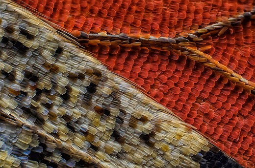 Vote now for your favorite Nikon Small World 2016 entries 7