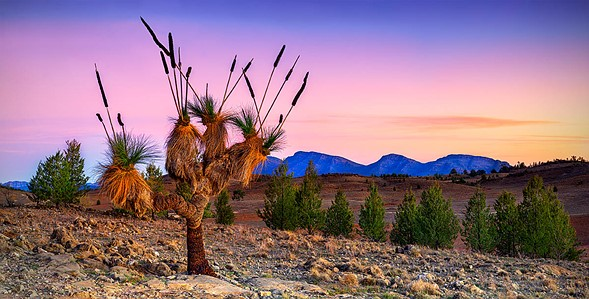 IGPOTY 2nd Place, Plants & Planet: 'Grass Tree' by <a href=