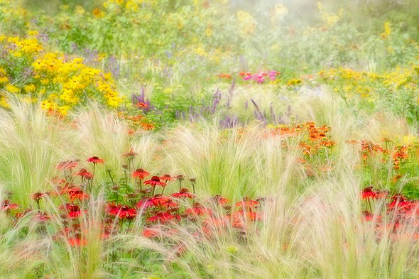 IGPOTY 1st Place, Beautiful Gardens: 'Summer Reverie' by <a href=