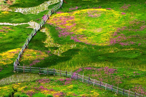 IGPOTY 1st Place, Wildflower Landscapes: 'The Beauty of Spring' by Zhigang Li (China)