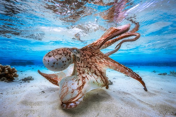 2017 Underwater Photographer of the Year