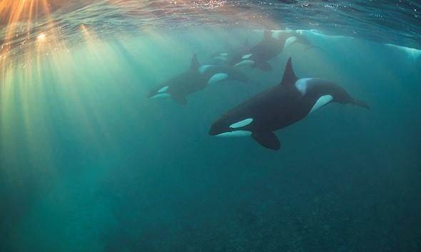2017Most Promising British Underwater Photographer