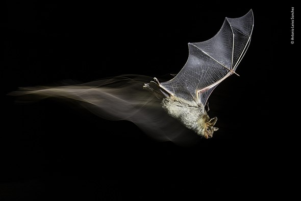 A Bat's Wake by Antonio Leiva Sanchez, Spain