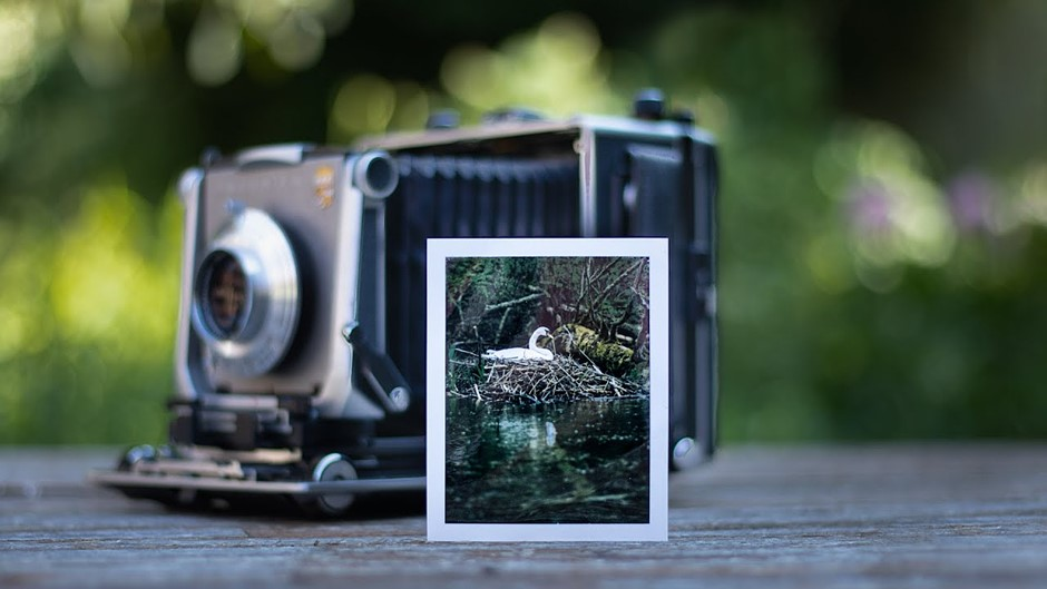 Video: Photographer uses a 4x5 large format camera and expired film for wildlife photography