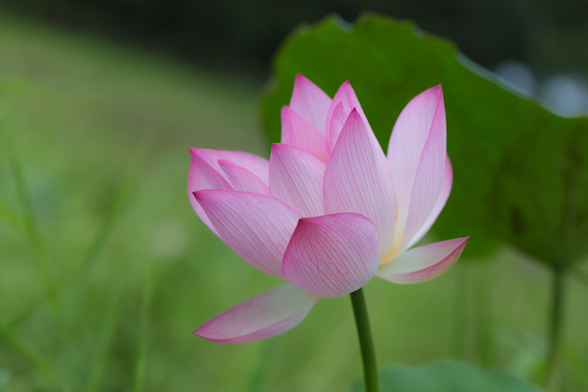 Re lotus flower of the buddha samples and galleries forum digital view original size izmirmasajfo Gallery