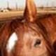 Gallopingphotog