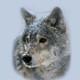 weideer wolf