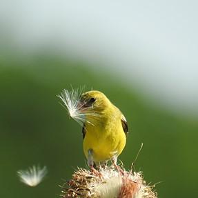 Nikon P900 birding