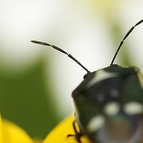 WINNERS*** Mini Challenge 485 - Macro Insects ***