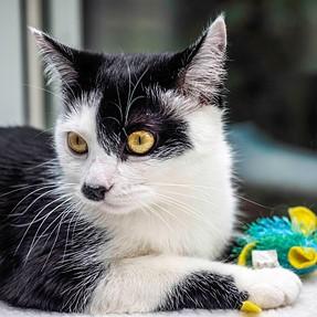 :-)) Sunday Cat! #458 July 10, 2016 ((-: