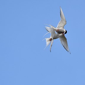 D500 Sigma 150-600 C bird photos