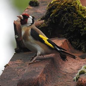 Nikon P900 birds photos