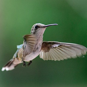 Some Humming Birds with D-500