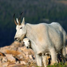 Random Northern Utah Wildlife