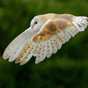 What a beautiful creature !