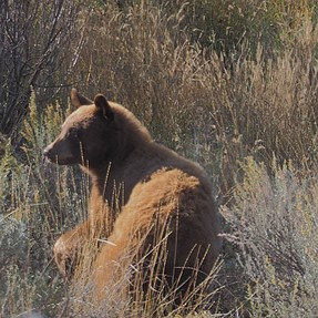 4th bear seen today.
