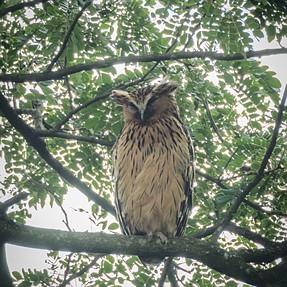 Finally... ...got some Owls...