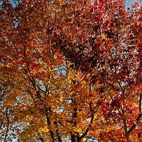 G9 - Last of fall