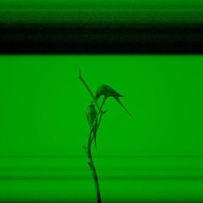 Nikon D500 weird Green Tint, black bar or full black