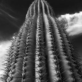 Arizona Skyscraper