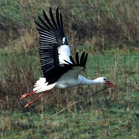 More BIF, storks