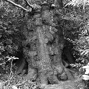 The tree monster!