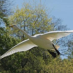 New : the ecologic kerosene free long range airliner..
